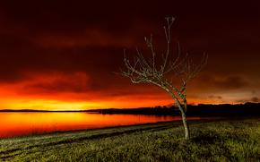 tramonto, lago, albero, paesaggio