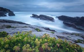 mar, Rochas, costa, Flores