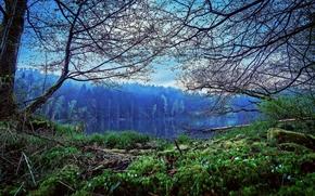 Hollensteinsee Lago, Parco Nazionale della Foresta Bavarese, paesaggio