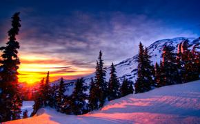 Mt. Rainier, Montagne, inverno, tramonto, alberi, derive, paesaggio