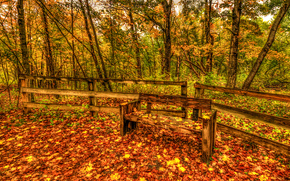 autumn, forest, trees, A bench, nature