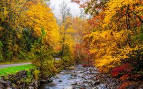 Grande Smoky Mountains National Park, Tennessee, autunno, stradale, fiume, foresta, alberi, paesaggio