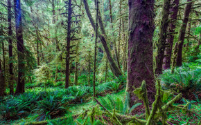 jurassic park, Olympic, Peninsula, mossy forest, trees, nature