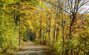 autumn, forest, park, road, trees, landscape