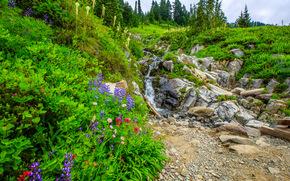 Mount Rainier National Park, Parco Nazionale Parco nazionale del Monte Rainier, Washington, piccolo fiume, Montagne, pietre, Colline, Fiori, paesaggio