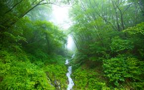 лес, деревья, речка, туман, природа