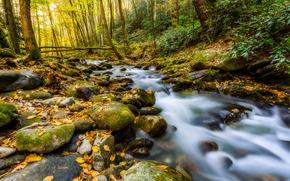 Грейт-Смоки-Национальный парк, штат Теннесси, речка, лес, камни, деревья, природа