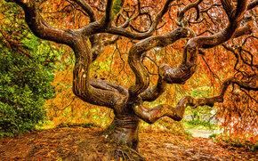 Kubota Garden, Seattle, сад, парк.дерево, осень, природа