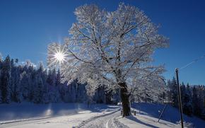 Zugerberg, Svizzera, inverno, nevicata, alberi, stradale, paesaggio