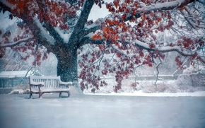 winter, snow, tree, bench