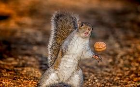 Eichhörnchen, Mutter, Situation
