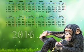 календарь с обезьяной на 2016 год, календарь на 2016 год, 2016, на рабочий стол
