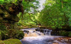 滝, 小さな川, 木, 岩, 自然