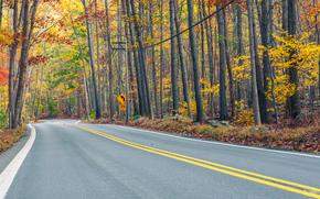 осень, дорога, лес, деревья, пейзаж