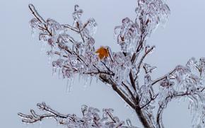 Gefrorener Baum, BRANCHEN, Eiszapfen, Natur, Eis