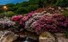 сад, парк, водопад, камни, цветы, япония