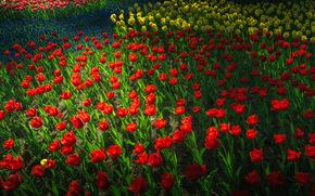 日立海滨公园, 郁金香, 植物群