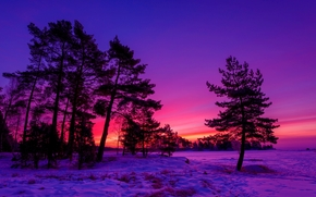 sunset, winter, trees, landscape