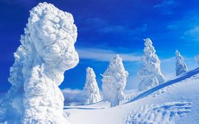 Mt. Zao, Yamagata Pref, Japan, горы, зима, деревья, сугробы, пейзаж