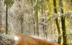 autumn, first snow, forest, trees, road, landscape