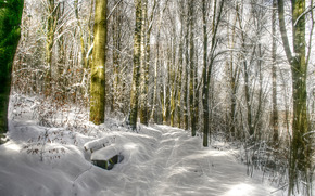 winter, forest, trees, A bench, drifts, landscape