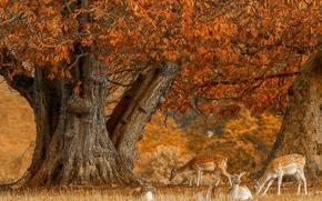 олени, дерево, осень