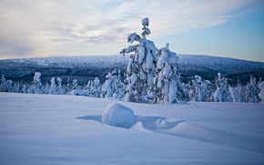 Lapland, Finland, Lapland, Finland, winter, snow, drifts, forest, trees, panorama