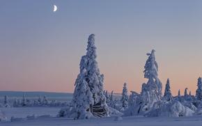 Gitsfjällets Nature Reserve, Vasterbotten, Sweden, Lapland, Vasterbotten, Sweden, Lapland, winter, snow, trees