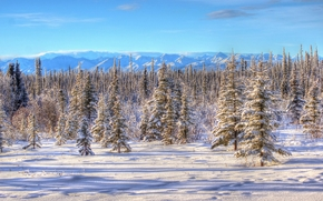 winter, snow, trees, Alaska, landscape