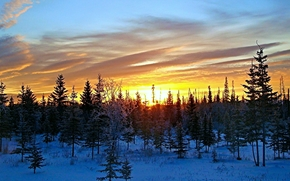 sunset, winter, snow, trees, Alaska, landscape