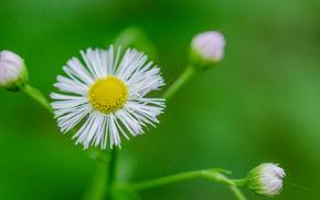 цветок, флора, макро