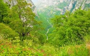 Río Voidomatis, Northwest Gretsii.gory, árboles, Flores, paisaje