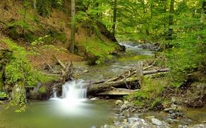 лес, речка, водопад, деревья, природа