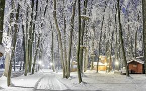 winter, park, road, houses, trees, lights, landscape