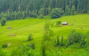 campo, Colline, domestico, dnrevya, Romania, paesaggio