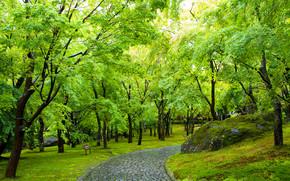 парк, дорога, деревья, япония, пейзаж