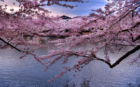 river, Sakura, Japan, landscape