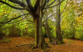 秋, 树, 森林, 性质