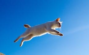 кот, кошка, прыжок, полёт