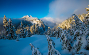 North Shore Mountains, Vancouver, British Columbia, Canada, North Shore Mountains, Vancouver, British Columbia, Canada, winter, snow, drifts, Mountains, forest, trees, spruce