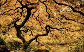 Japanese Garden, Portland, Oregon, USA, осень, дерево, парк, природа