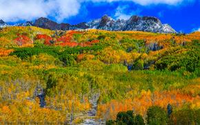 Kebler Pass, Colorado, otoño, Montañas, bosque, árboles, paisaje, perspectiva de encima
