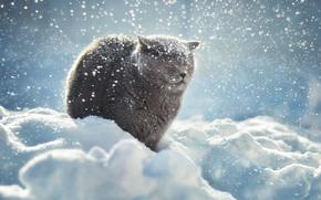 gatto, COTE, nevicata, inverno