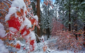 forest, winter, first snow, trees, nature