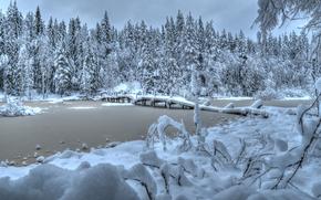 winter, river, forest, bridge, trees, landscape