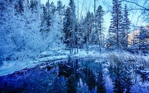 winter, pond, forest, trees, landscape