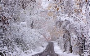winter, road, forest, trees, first snow, landscape