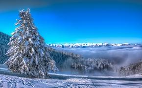 3exp, Francja, Góry, Pireneje, zima, drzew, krajobraz