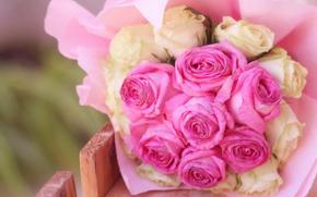 rosa, Roses, flor, Flores, flora, plantas, generosamente, suavemente
