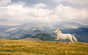 cavallo, Cavalli, cavallo, cavallo, stallone, cavalli, animali